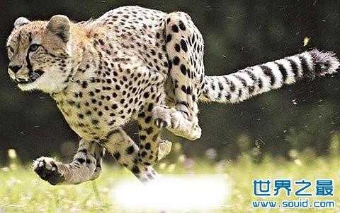 世界上最快的动物