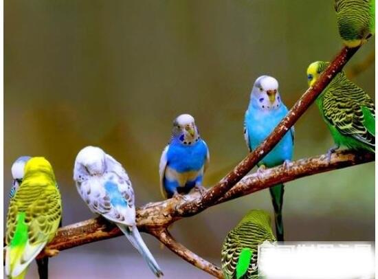 迁徙的鸟类有哪些,大雁、燕子、白鹳等都是常见的迁徙鸟类