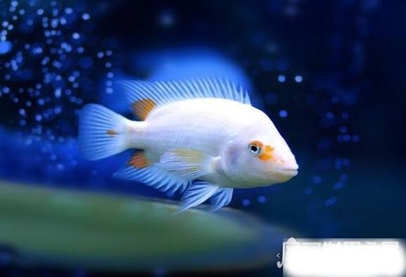 目前世界上的鱼有多少种,光是有名字的鱼就有32100多种