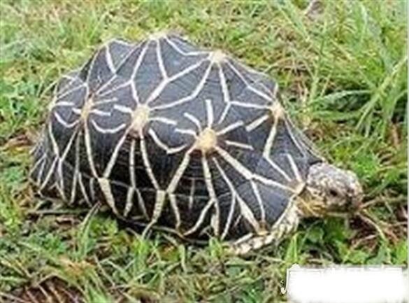 乌龟寿命最长多少年?最长269年(平均寿命为50年)