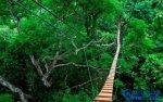 全球十大静美森林排行榜