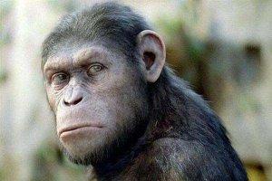 世界十大最聪明动物 类人猿是最像人类的存在