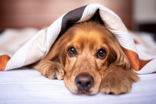 阿拉斯加幼犬一天要喝几次水好呢? 如果幼犬吃撑了会有什么反应呢? 求高人指教
